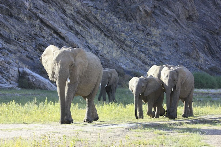 Desert Elephants (Laura Brown)