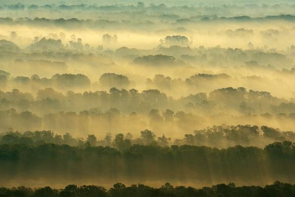 Letea forest, Danube delta rewilding area, Romania